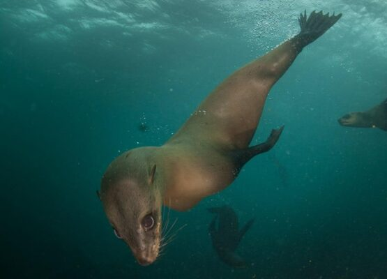 Snorkeling with Seals (Image: Supplied)